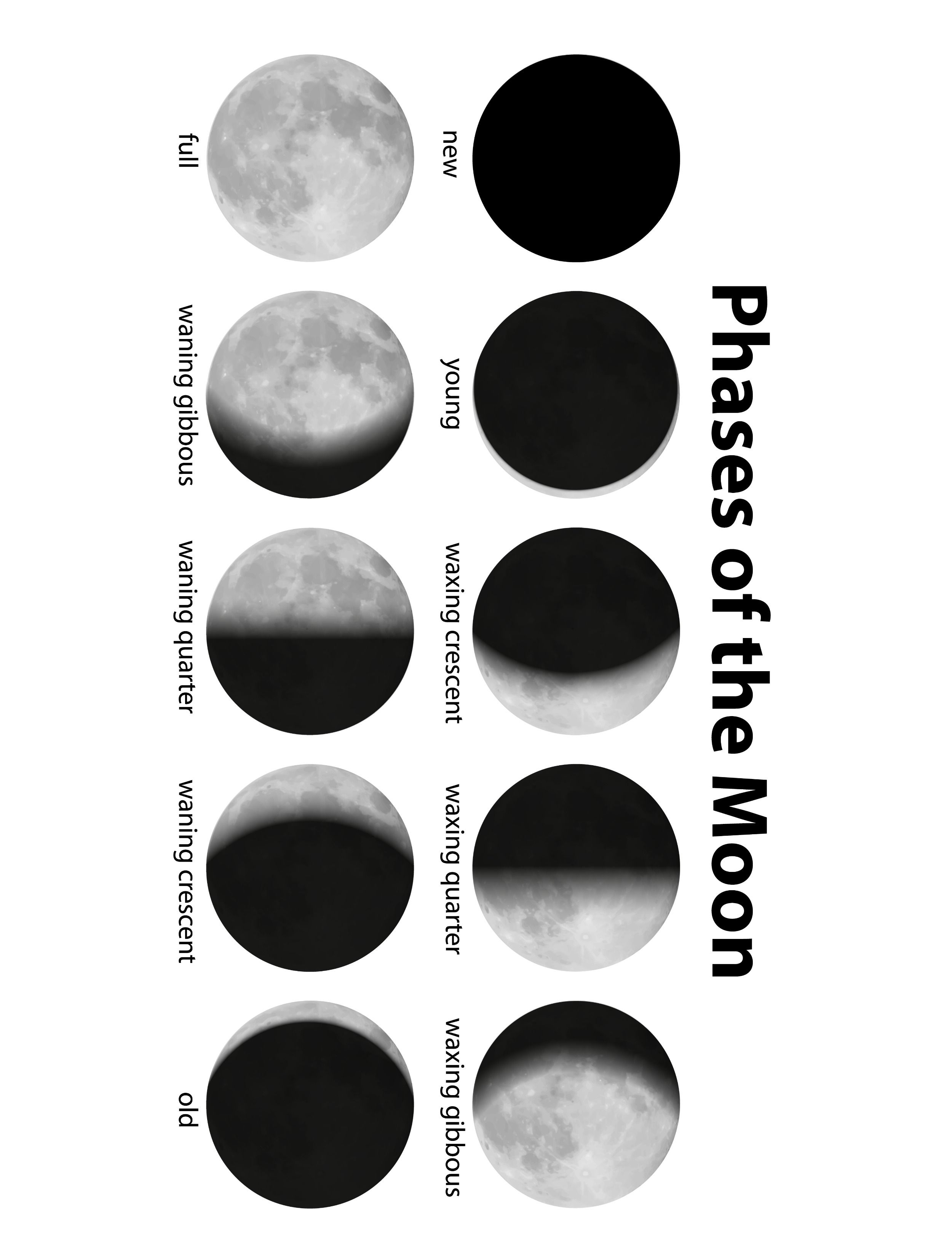 Phases Of The Moon Printable For Web Use