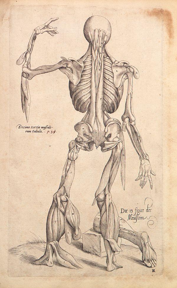 De Humani Corporis Fabrica\' - Andreas Vesalius, 1543 - #Anatomy ...