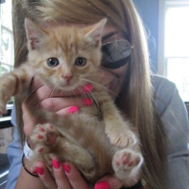 Via Tumblr Super cute animals, Kittens cutest, Orange