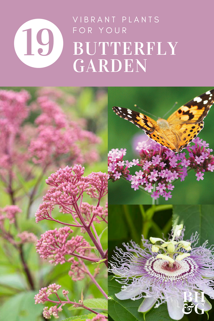 20 Flowers To Use In Your Butterfly Garden Butterfly Garden Plants Butterfly Garden Pollinator Garden