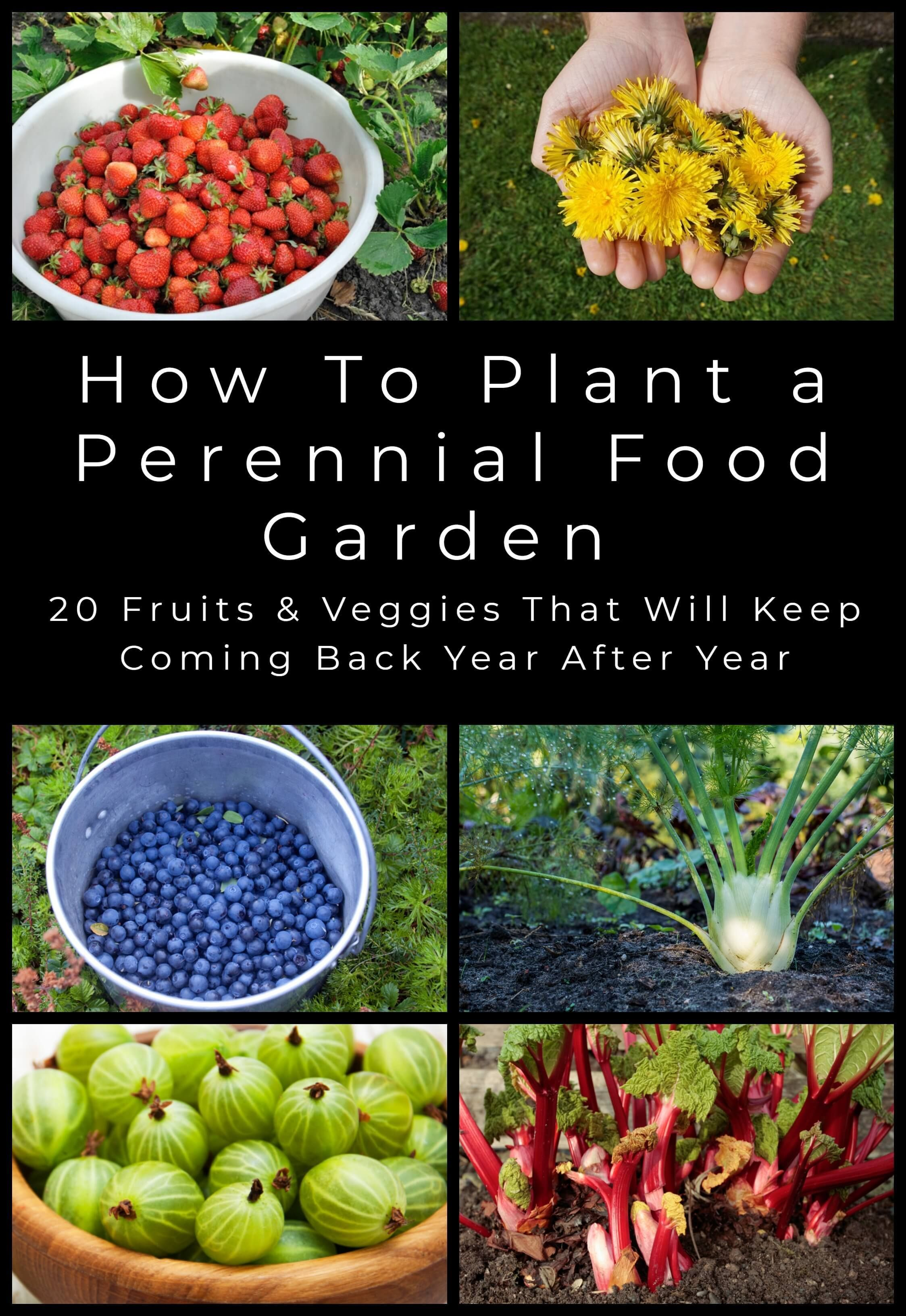 20 Perennial Fruits Veggies To Plant Once Harvest Year After