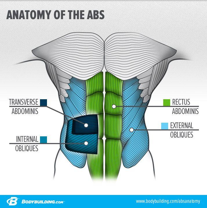 9 Things You Should Never Do On Ab Day | Ejercicios, Anatomía y El ...