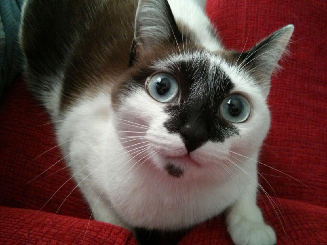 Hola Gatos Cats Kitty Animals Cats