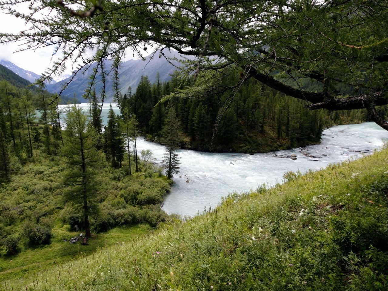 Stromy obrazy, horská rieka tapety, malomyseľnosť vektor, drevo pozadí