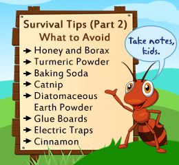 How to get rid of flying ants ant helpful hints and survival how to get rid of flying ants ccuart Gallery
