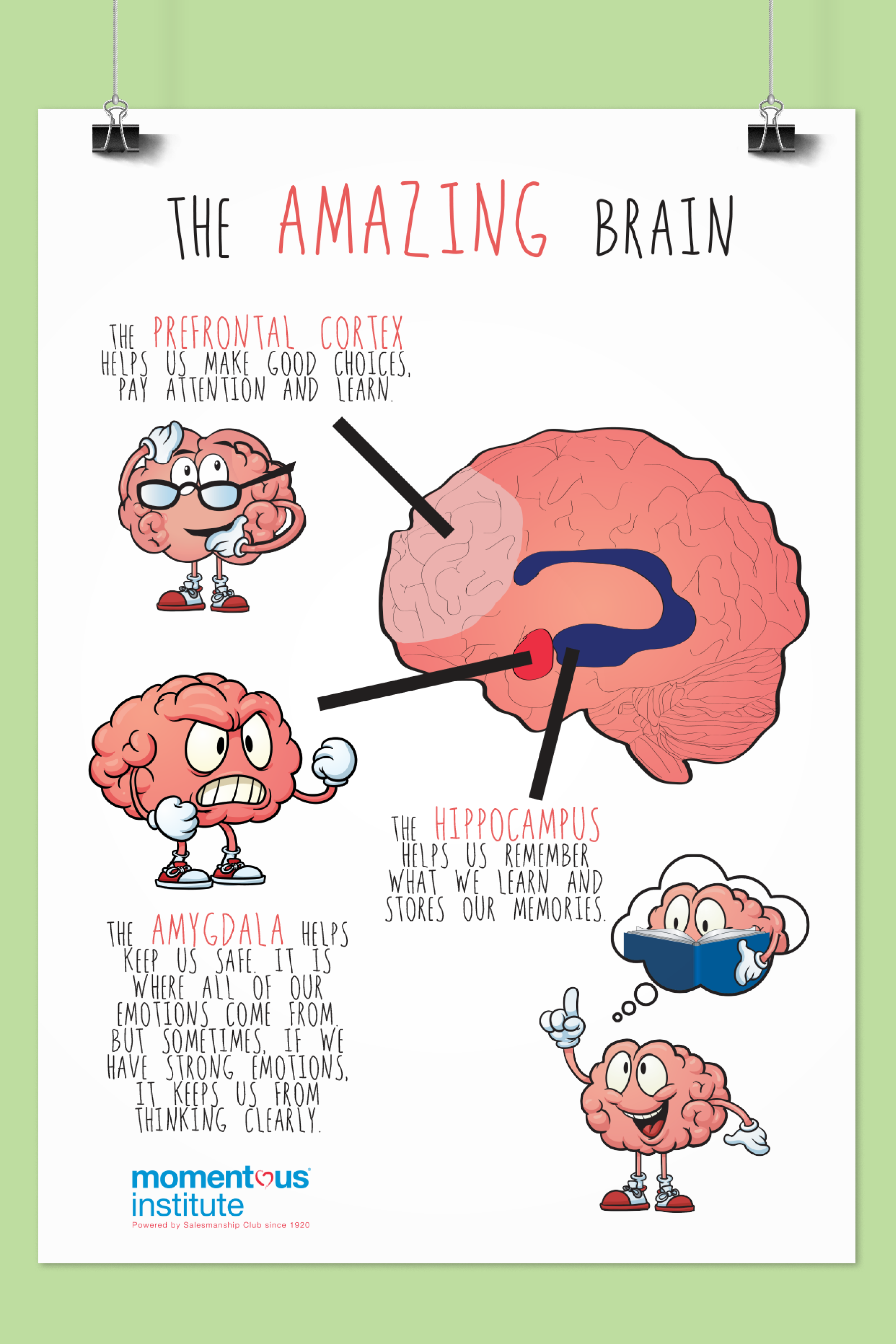 The Amazing Brain Poster   Brain learning, Brain ...