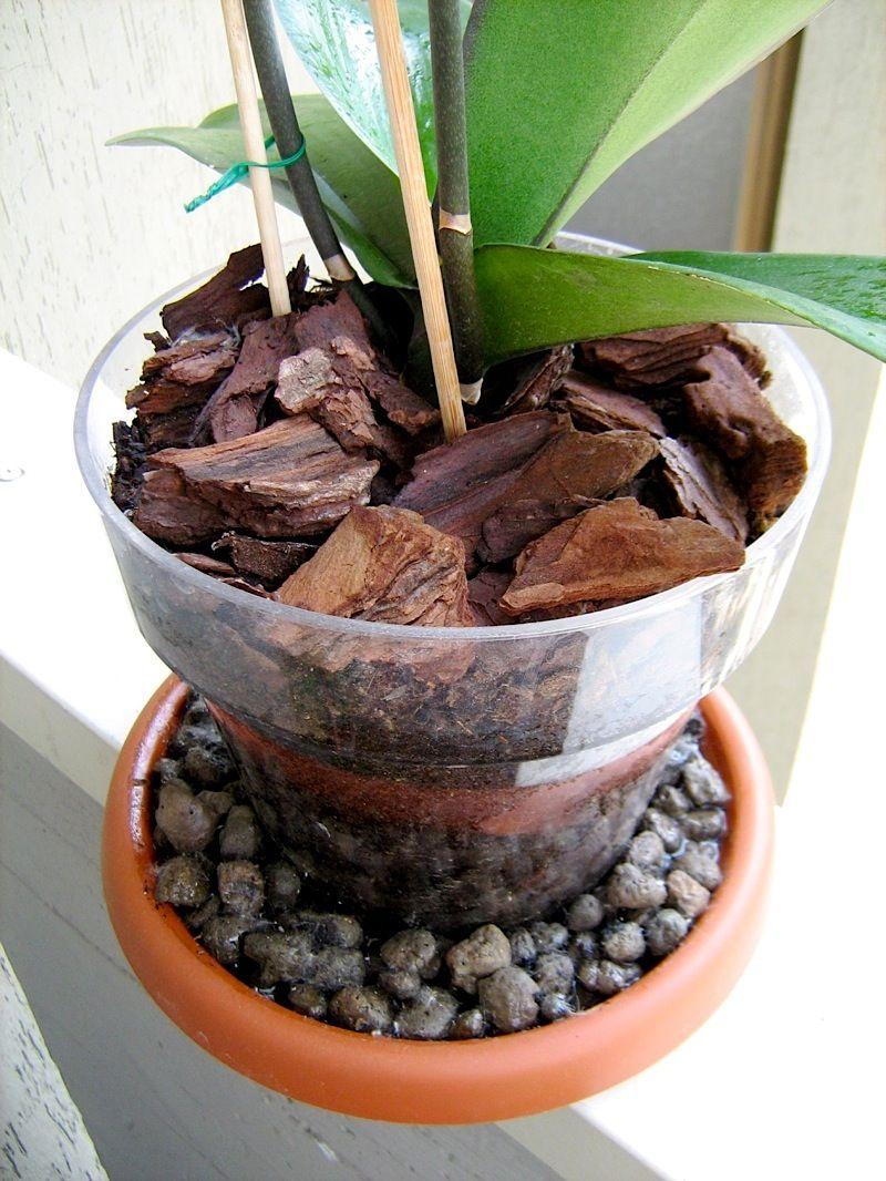 Informazioni e consigli utili su come coltivare un - Vasi per orchidee ...