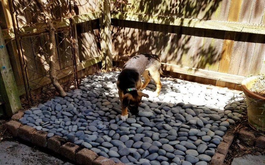 Diy small patio dog bathroom dog bathroom dog rooms