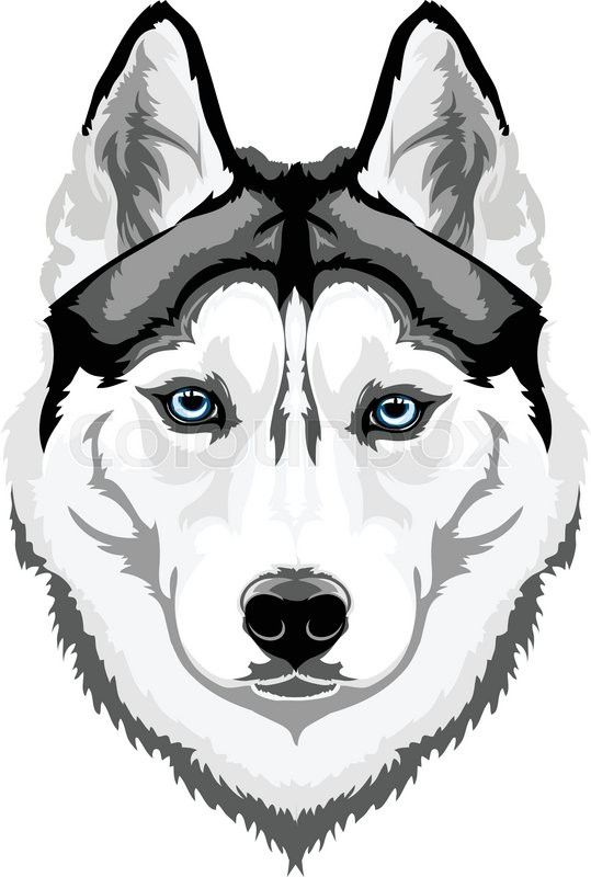 Vector head intelligent dog breed Siberian Husky | Vector ...