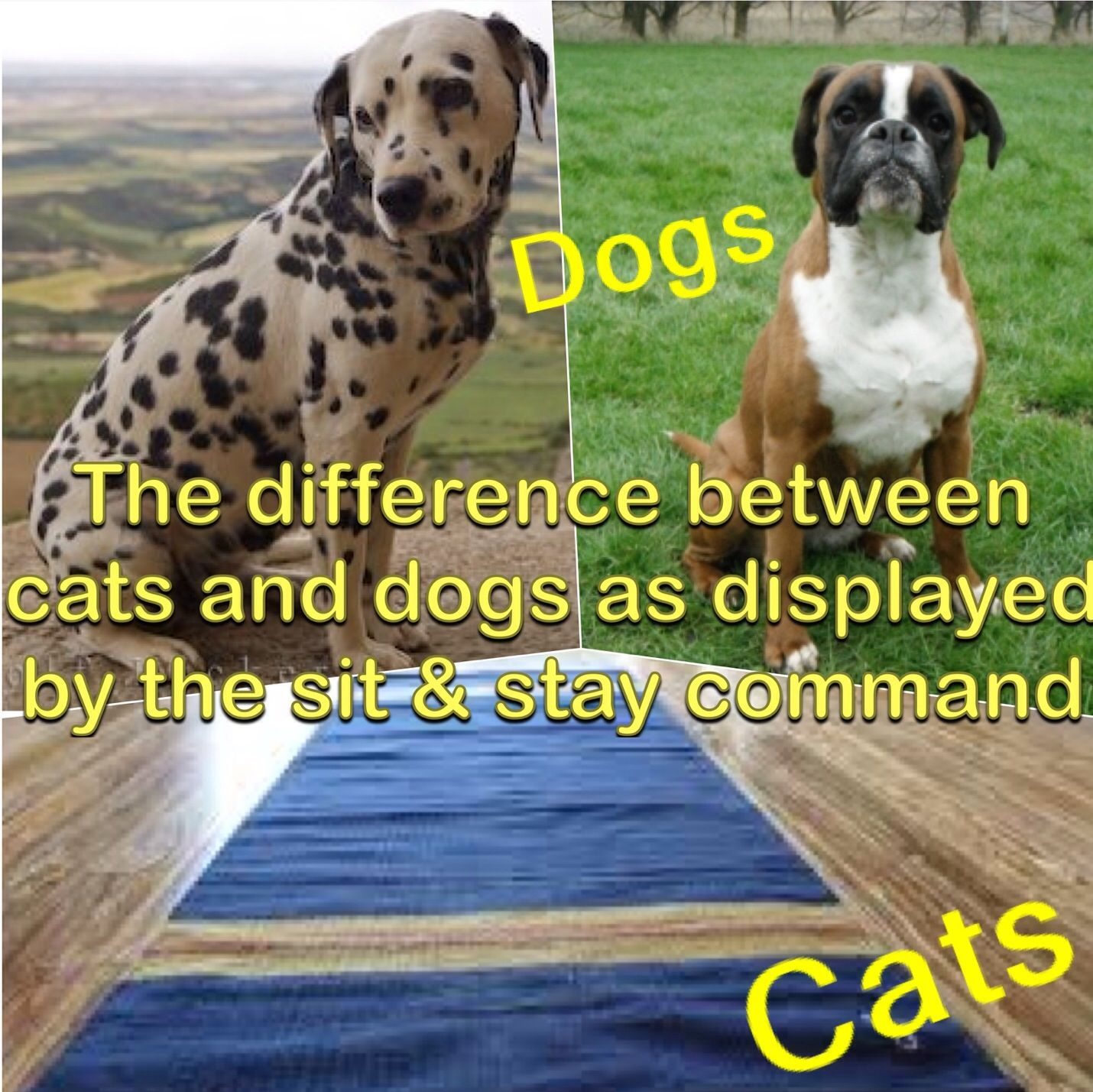 The difference between cats and dogs. Animal antics