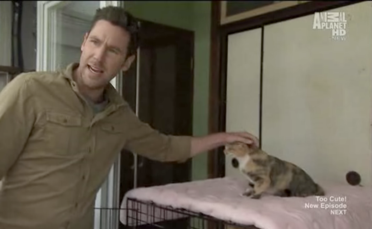 Must Love Cats (with John Fulton) visit Japan Cat Network