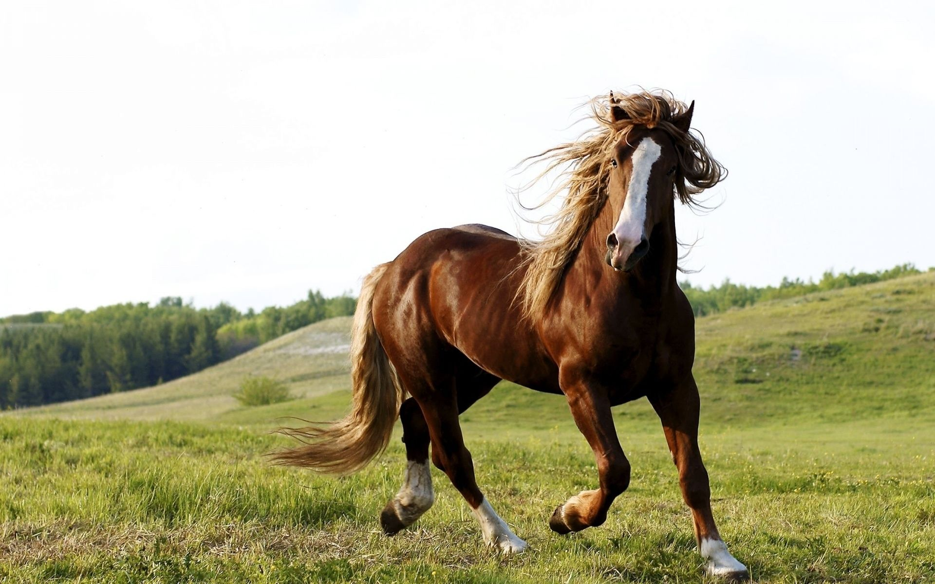 Amazing Wallpaper Horse Android - f65d73b2f7564e5a0ecd0892664db289  Pictures_207588.jpg