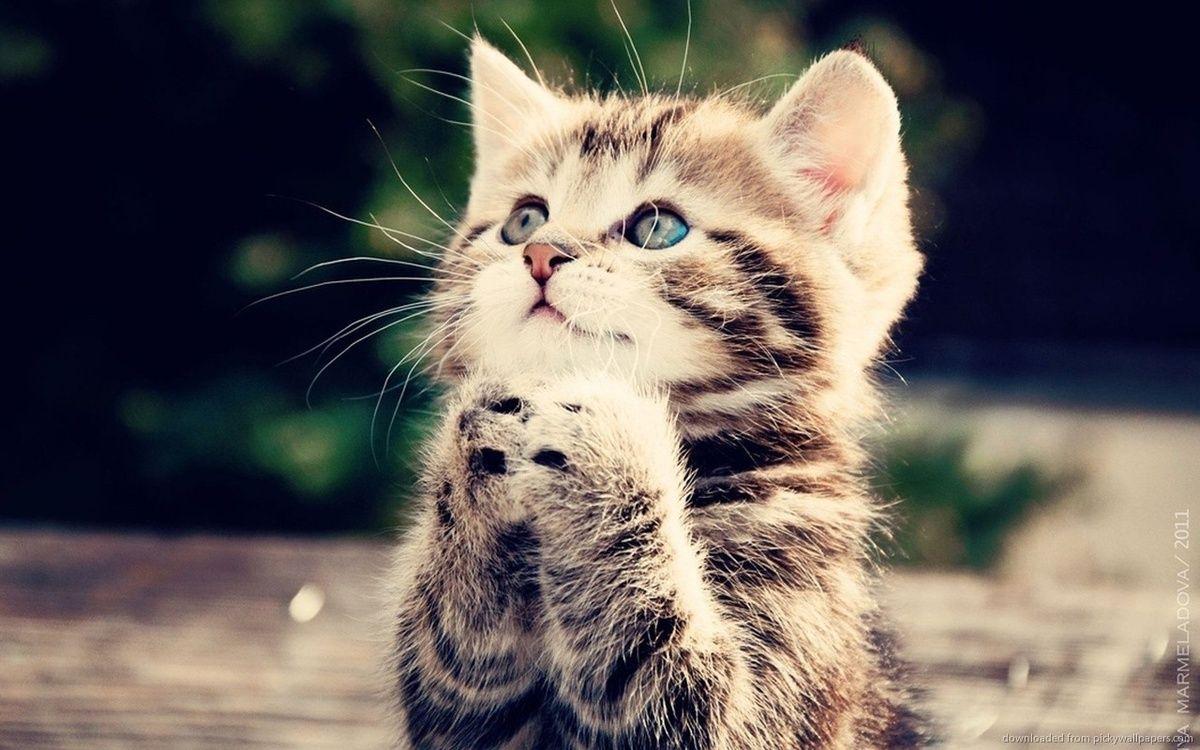 Fluffy Kitten Kittens Cutest Cute Cats Pets