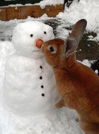 """""""I got your Nose""""-Cute Bunny"""