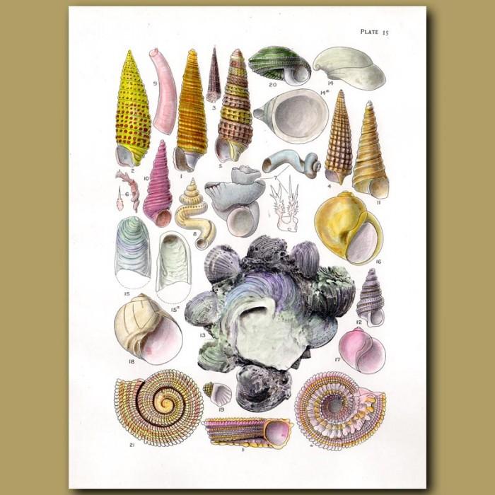 Vintage sea shells Fabric Cotton Panel Make Cushion Upholstery Craft