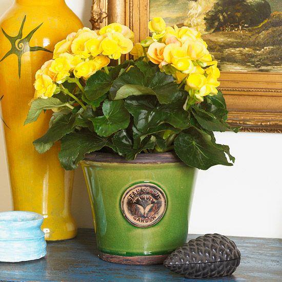 Pin On Indoor Plants We Love