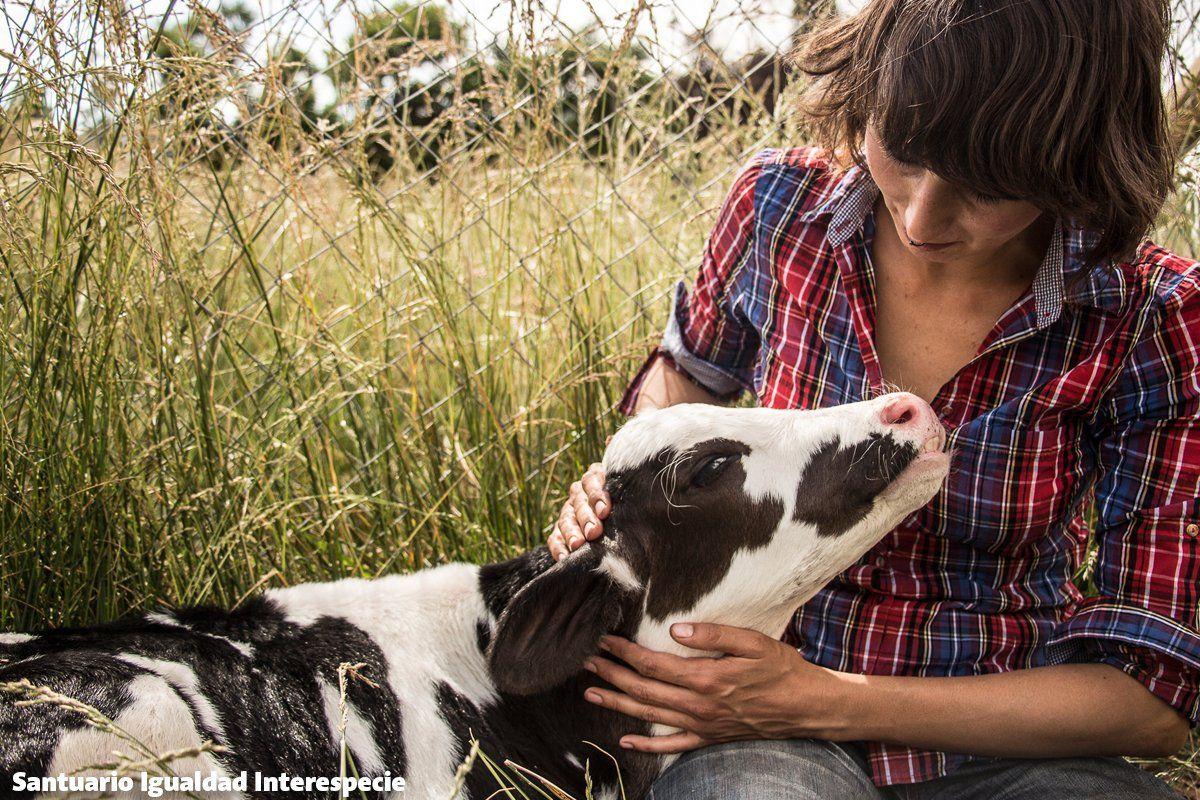 Con pocos días de vida Salvador comenzaba una vida en #libertad lejos de la cruel industria láctea  #veganforthem https://t.co/JiTtlnszTj