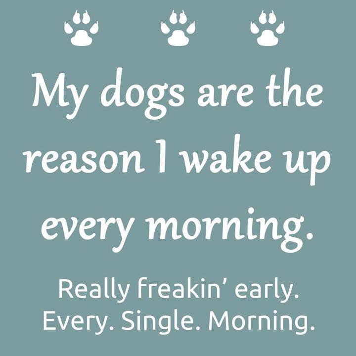 Really early.... #truth #doglovers