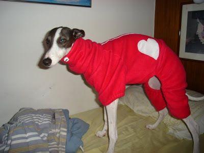 LOUCOS POR GALGOS roupas para whippet greyhound italiano galgo