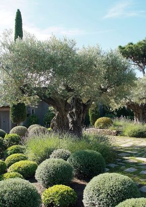 Eye catching mediterranean garden decor ideas 6 gardens eye catching mediterranean garden decor ideas 6 workwithnaturefo