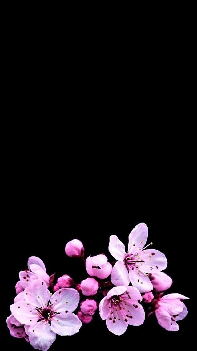 Flowers в 2020 г | Цветочные фоны, Цветы, Цветочные ...