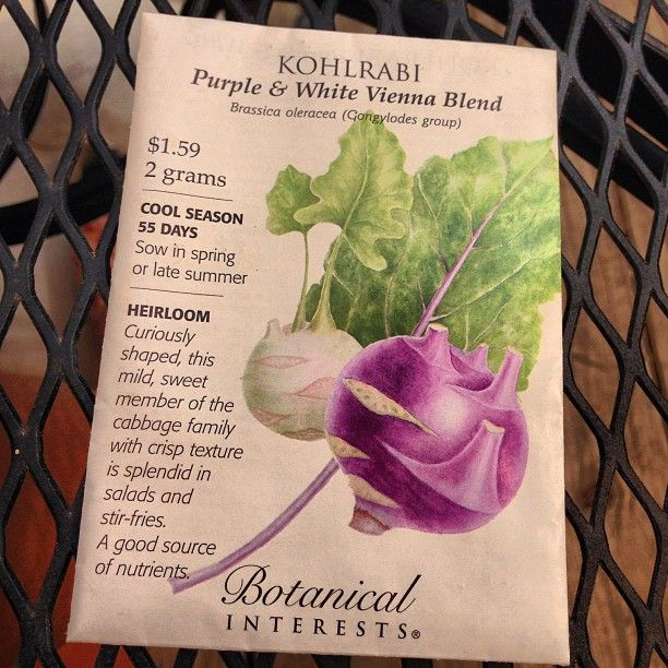 When I was searching Pinterest yesterday for chard recipes, I was surprised* to see so many people mislabeling #Kohlrabi as #chard. Kohlrabi is a cruciferous veg in the Brassicaceae (#cabbage) family, while chard is chenopod (leafy green, like #mustard) in the amaranthaceae family. *although I shouldn't be surprised, as I've seen many people confuse rainbow chard for rhubarb.