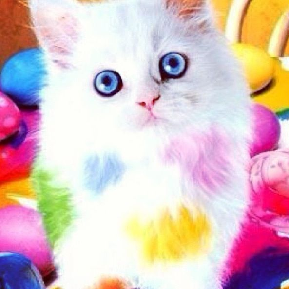 Rainbow cat :) | Cute Animals | Disney cats, Cats, Cute cats
