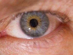 Human Chimera Eyes   ancestors   Chimera, Eyes