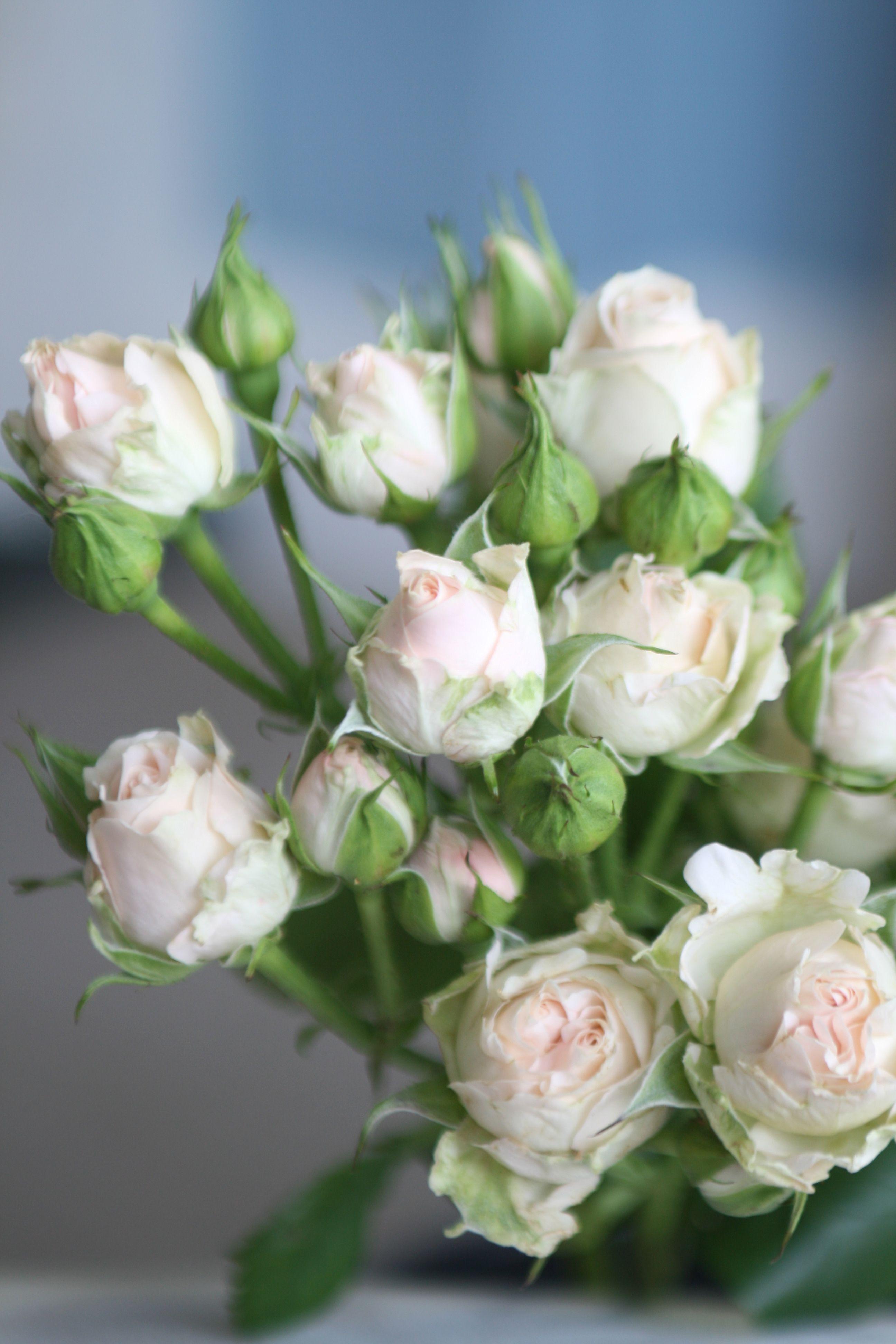 Peach spray roses. VarietyJana Flowers, Love flowers