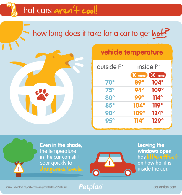 Hot Cars Are Dangerous For Pets Infographic Summer Safety Tips Pet Insurance Reviews Hot Cars