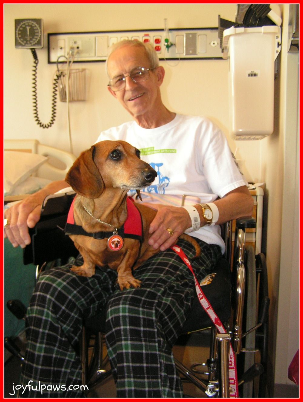 doxie pet therapy love! Therapy dogs, Dogs, Therapy animals