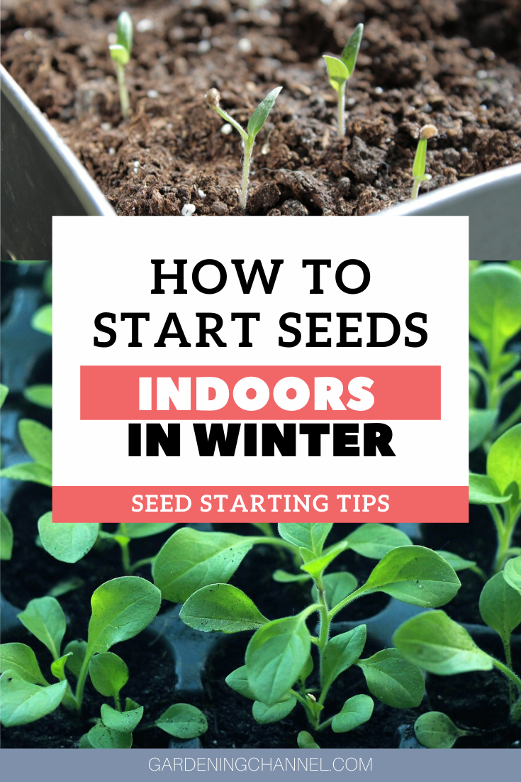 How To Start Seeds Indoors In The Winter Gardening Channel In 2020 Starting Vegetable Seeds Organic Gardening Tips Organic Horticulture