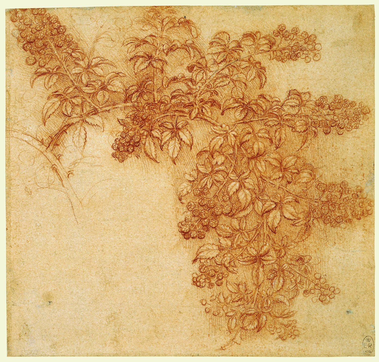 Букет, леонардо да винчи цветы