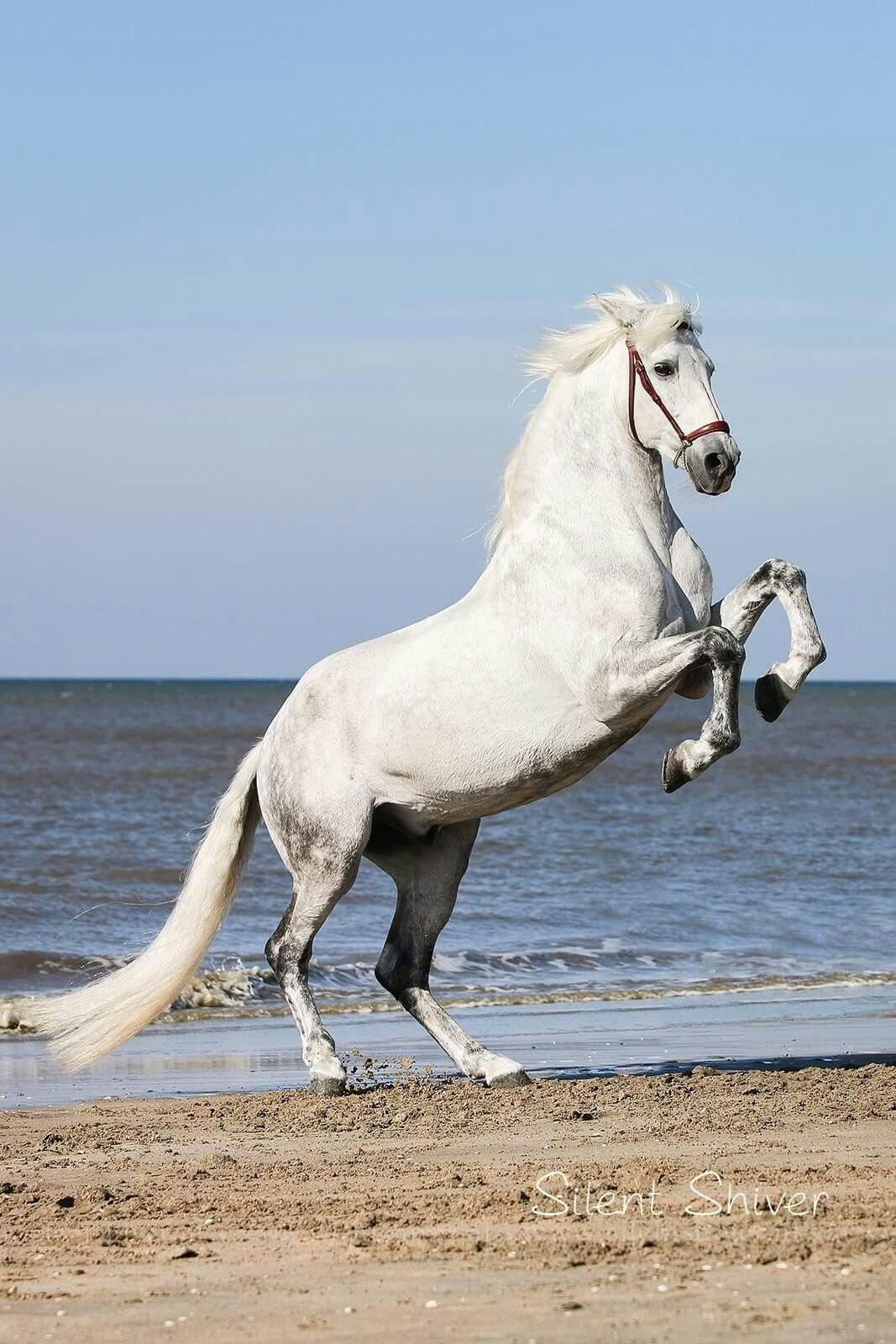 pingl par kimberly hughes sur pretty horses pinterest espagnol. Black Bedroom Furniture Sets. Home Design Ideas