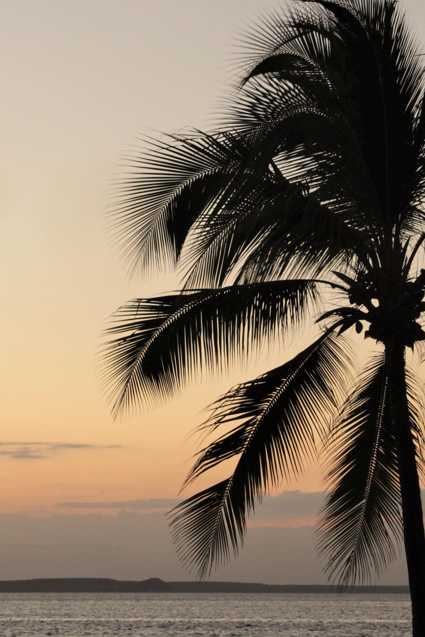 Palmier Et Coucher De Soleil A Cienfuegos Cuba Cienfuegos Fond D Ecran Palmier Fond D Ecran Telephone Photos Paysage