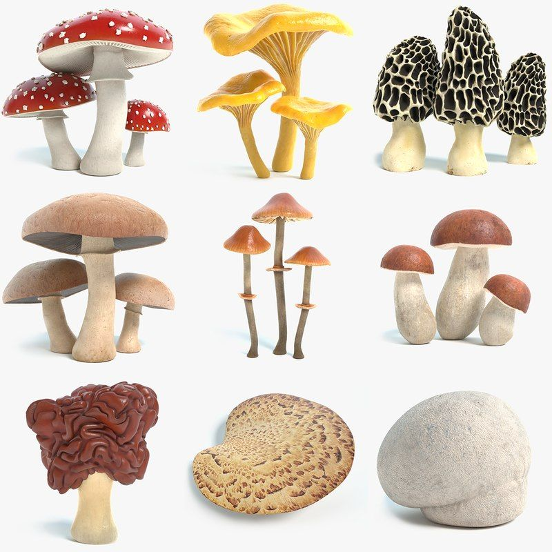 Mushroom 3D Model Collection with PBR textures - TurboSquid