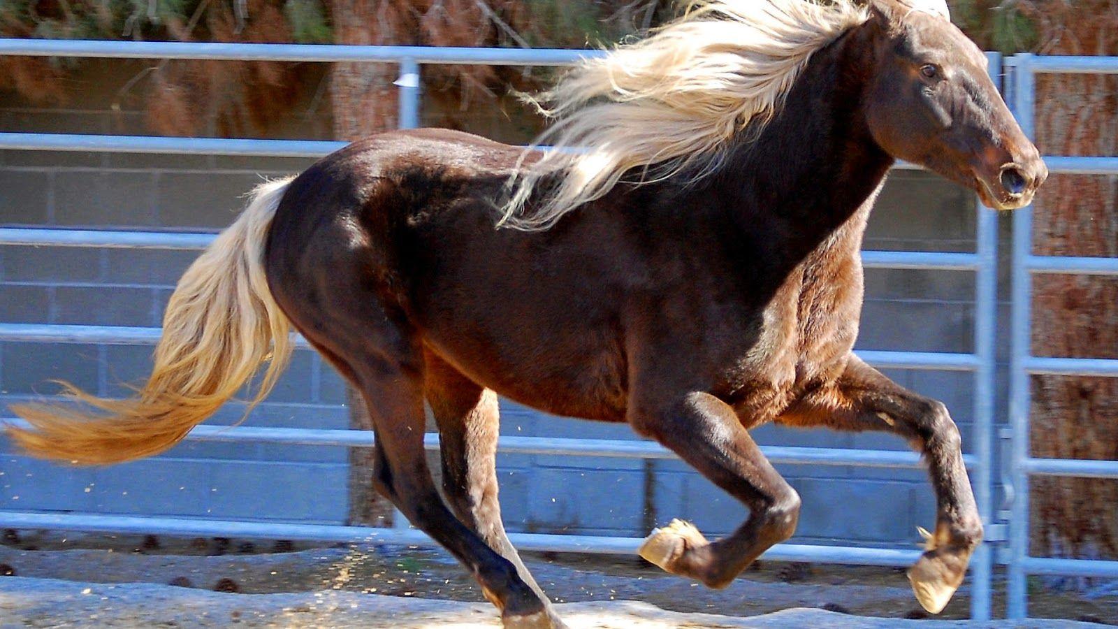 Wonderful Wallpaper Horse Laptop - f6640294f24fc15bfb5eab66a8601b51  2018_882955.jpg