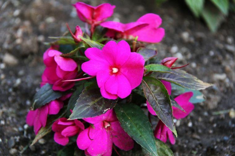 Plantas de sombra 9 opciones para el jardín