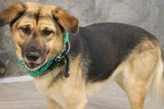 Lemmon Has 4 Day S Left To Live Lemmon Breed German Shepherd Mix Breed Age Young Adult Gender Male Size Large Dog Friends Puppy Kennel Dog Id