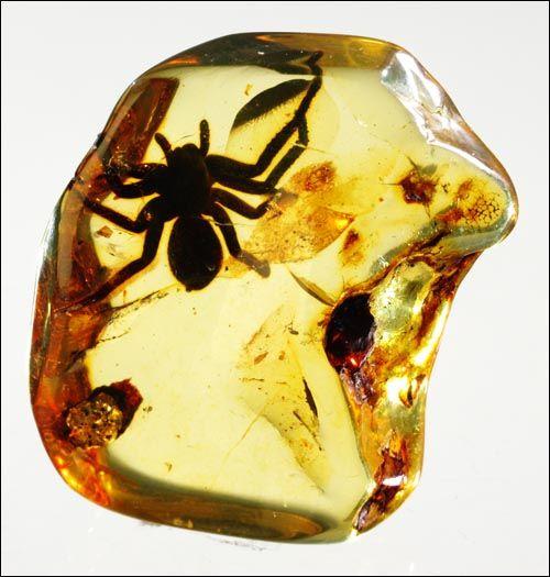 Fossil Spider Inside Amber