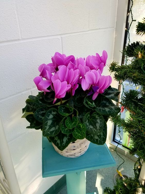 Lewiston Florist Flower Delivery By Stillings Embry Florists Dish Gardenorder Flowers Onlinefresh