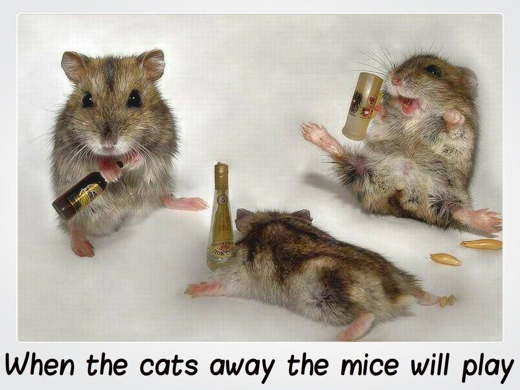 Drunk-Mice-animal-humor-1993688-1024-768
