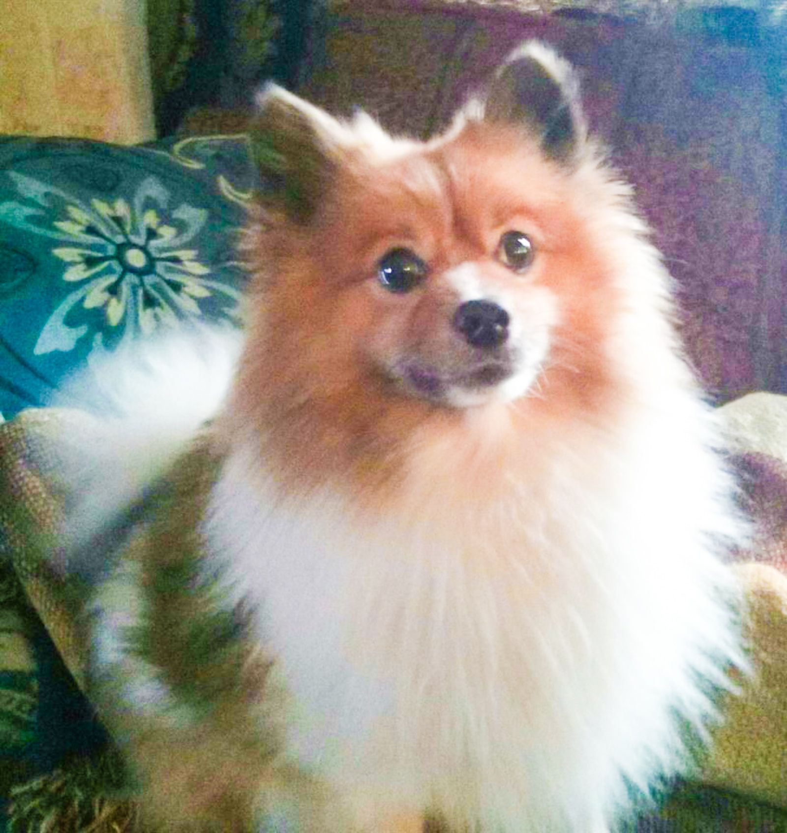 Lost Dog Male West Akron, OH, USA 44320 Losing a dog