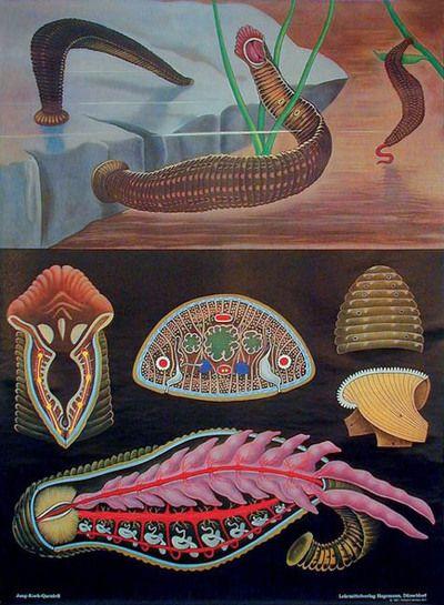 Anatomy of a Leech  http://7deadlysinners.typepad.com/sinners/images/2007/11/21/leech_chart.jpg