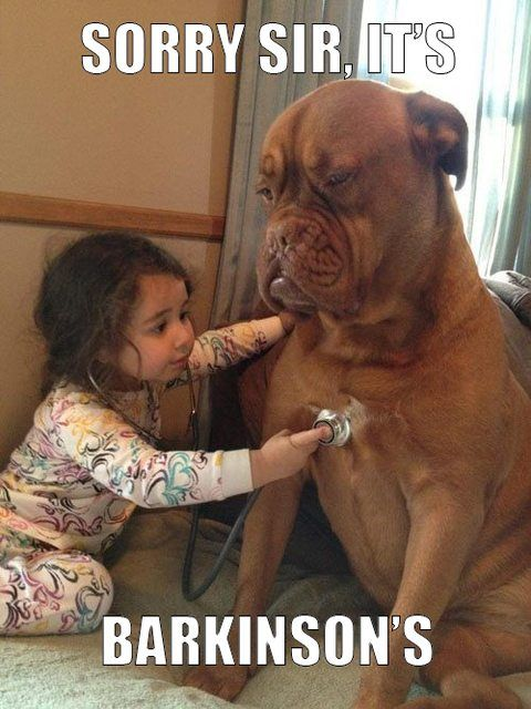 de3b278d25 Adorable   ) Go to Petmountain.com to save up to 50% on all pet products!!   Petm Discount I Cheap I animal meme I pet meme I dog meme I funny I cute