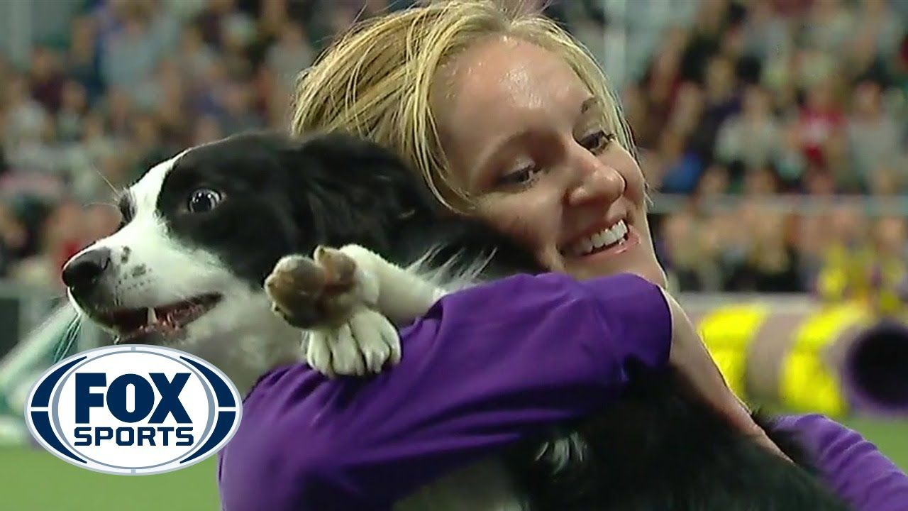P!nk the border collie wins backtoback titles at the