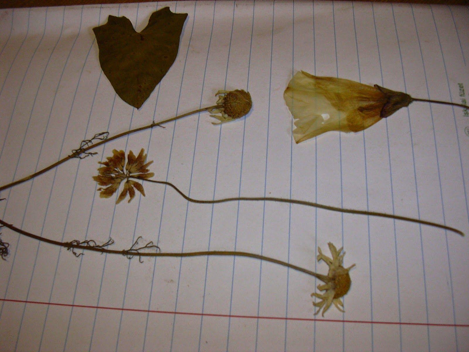 Blätter Pressen die fantastischen 5 blumen und blätter pressen kränze gestecke