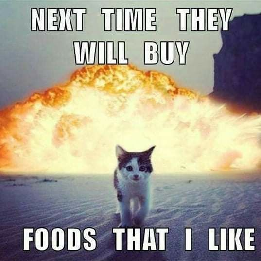 Pin By Neema On Cats Funny Cat Pictures Funny Animals Funny Animal Memes