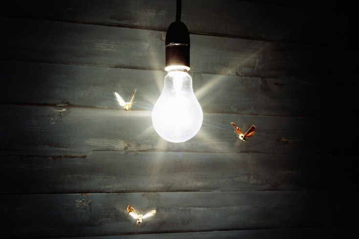 Why Are Bugs Attracted To Lights Biology Lighting Light Bulb