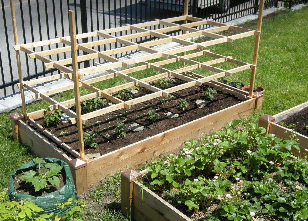 Tomato trellis and bag zucchini plants | GARDENING | Pinterest